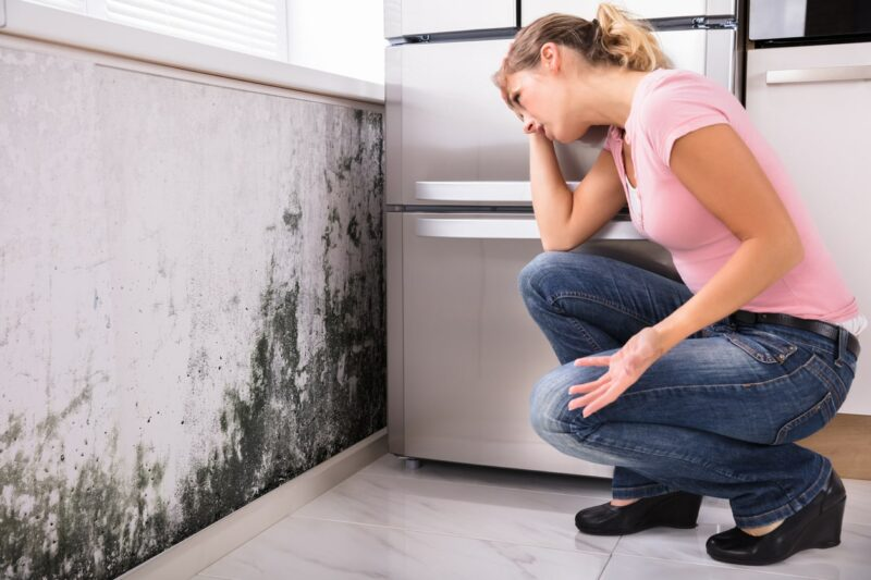 Types Of Mold In The Household